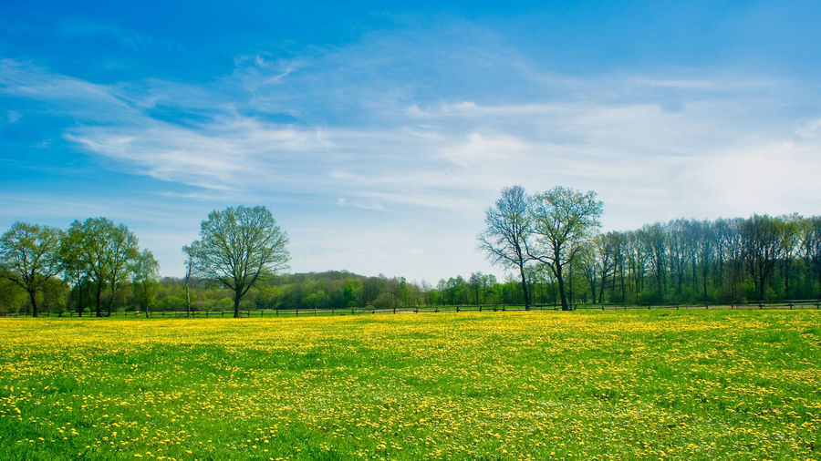 Backgrounds Background Copy Space Springtime Spring Plant Sky Beauty In Nature Landscape Tree Land Tranquility Tranquil Scene Environment Field Scenics - Nature Cloud - Sky Grass Green Color Nature Non-urban Scene Growth No People Day Idyllic Outdoors