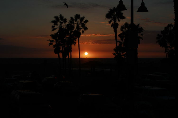 Omw to Happy Hour Check Out TheBeauty In Nature California Dark Dusk Growth Horizon Over Water Nature Orange Color Palm Tree Scenics Sea Sky Summer Nights Summer, Sun Sunset Tranquil Scene Tranquility Tree Venice Beach Venice Bistro Water