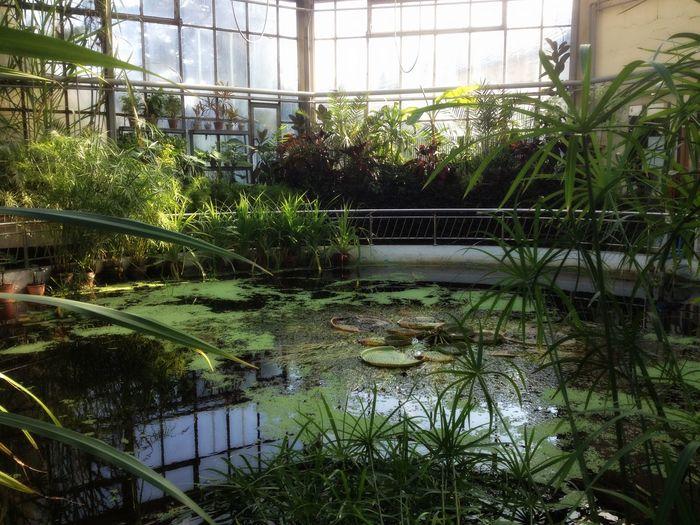 #architecture #botanical #botanical Garden #buildings #cluj #pond #exoticplants #plants #fruits #pretty #nature #reflections