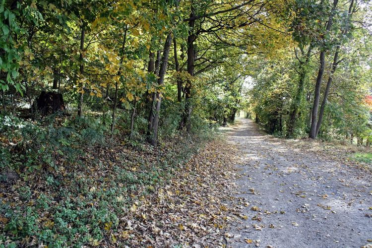 Trail in park.