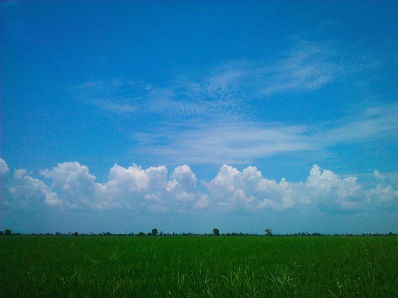 Sky_collection Sky And Clouds Paddy Fields Greenpaddy Green Nature Eye Em Landscape-Collection EyeEm Nature Lover Nature_collection Eyemphotography Sekinchan, Malaysia