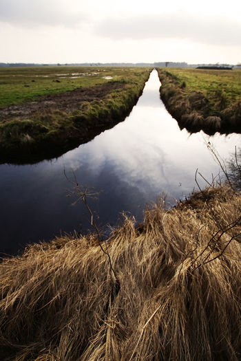 Drainage ditch crossing pasture in winter Pasture Reflection Winter Backlighting Beauty In Nature Clouds And Sky Day Ditch Drainage Drainage Channel Field Grass Grassland Landscape Meadow Nature No People Northern Germany Outdoors Reflections Scenics Sky Tranquil Scene Tranquility Water