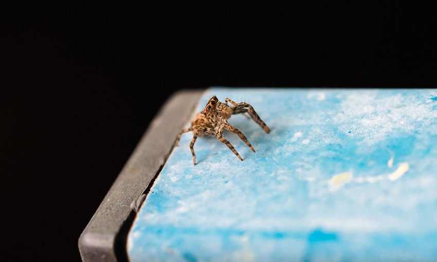 High Angle View Of Spider On Metal