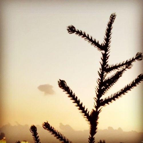 Dubai Christmas Minitree Sky Sunset Clouds orange christmasindubai christmas dubai uae