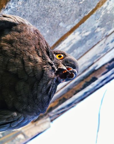 error error EyeEm Best Shots EyeEmNewHere EyeEm Pictureoftheday Pain Phonography  Potrait Abstract Photography Journalism Racialism Flaws Getty Pegion Bird Photography Racial Cold Temperature Snow Close-up Perching Bird Of Prey Wildlife