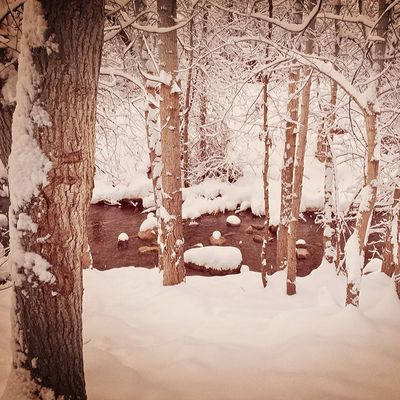 Sense of solitude Utah Utahgram Utahgramer Ig_utah winter westernlandscape beautiful snow awesome instagood trees snow water landscape nature