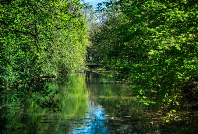 Ruhrgebiet Ruhrpottromantik Ruhrpott Forestwalk Forest Photography Nikon D750 Beauty In Nature Foliage Forest Green Color Growth Lake Land Lush Foliage Nature Outdoors Plant Rainforest Reflection Scenics - Nature Tranquil Scene Tranquility Tree Water WoodLand The Great Outdoors - 2018 EyeEm Awards