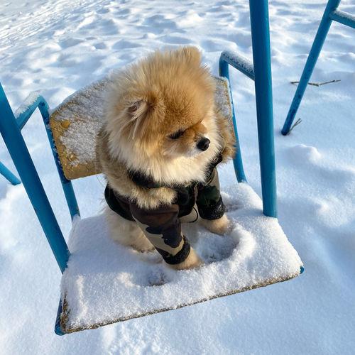 High angle view of animal on snow