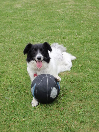 Basketball Happy Animal Themes Ball Blackandwhite Day Dog Domestic Animals Grass Looking At Camera No People One Animal Outdoors Pet Pet Portraits