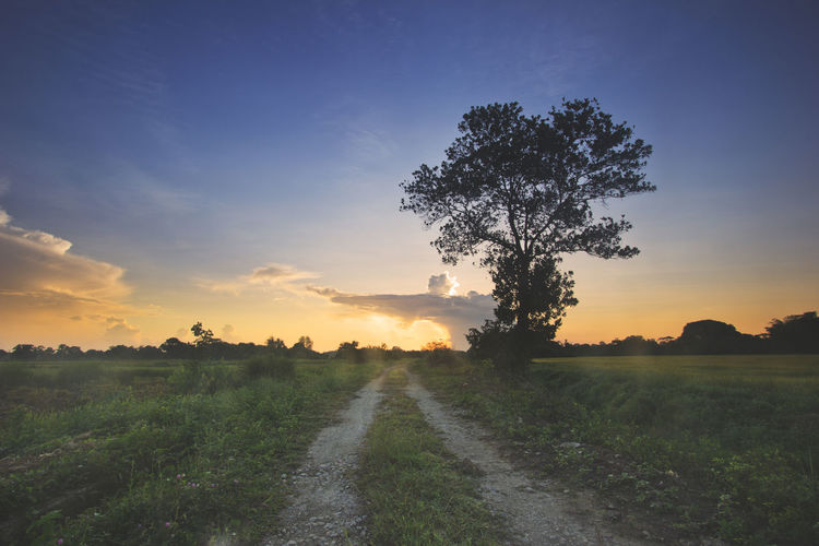 A silhouetted tree during sunrise with gravel road creating perspective for the photo. Agriculture Beauty In Nature Day Field Grass Growth Landscape Nature No People Outdoors Rural Scene Scenics Silhouette, Sunset, Tree, Sunrise, Sky, Landscape, Summer, Nature, Orange, Meadow, Sun, Dusk, Horizon, Scenic, Background, Travel, Sundown, Evening, Colorful, Light, Yellow, Outdoor, Sunlight, Asia, Twilight, Field, Photo, Nobody, Tropical, Grass, Beautif Sky Sunset The Way Forward Tranquil Scene Tranquility Tree