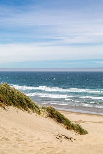 Looking out over sand dunes and the beach towards the ocean, on the oregon coast