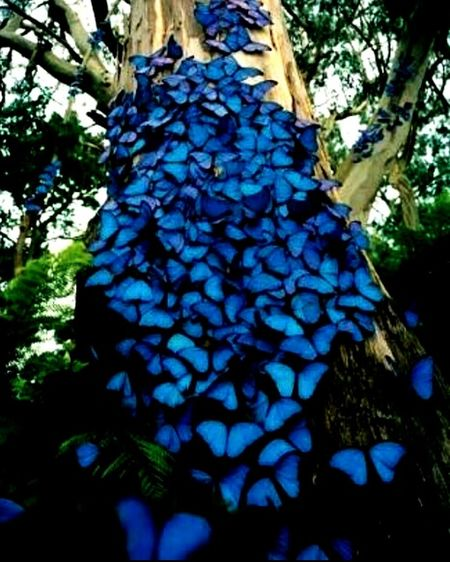 Butterfly Blue Nature Beatiful