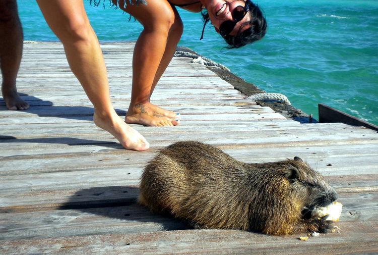 Women looking at capybara on boardwalk by sea