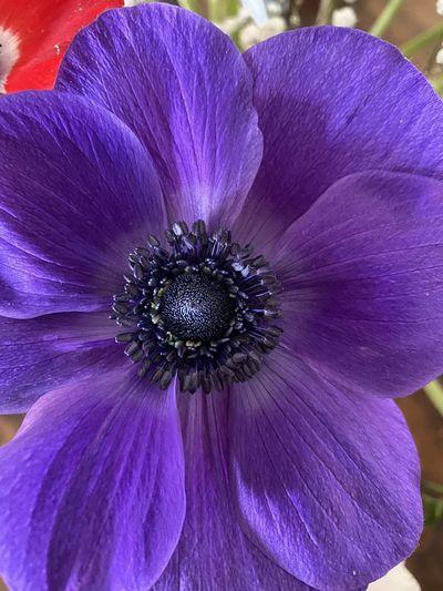 Close-up of purple flower