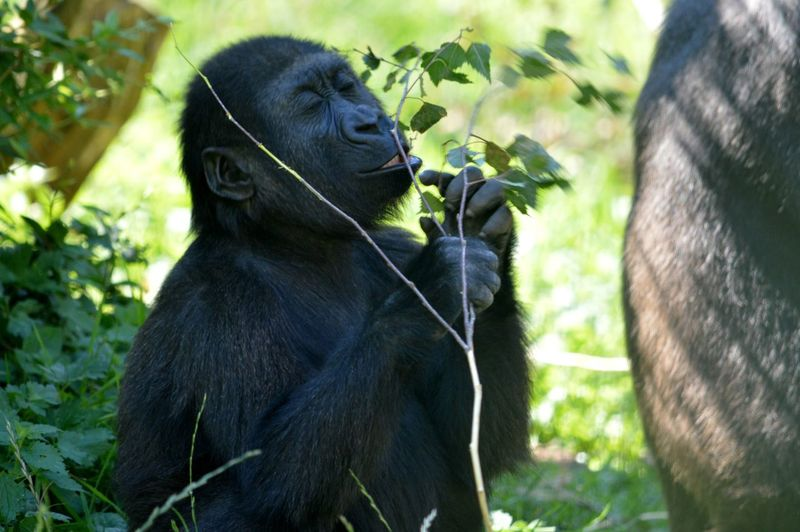 Monkey eating plant in forest