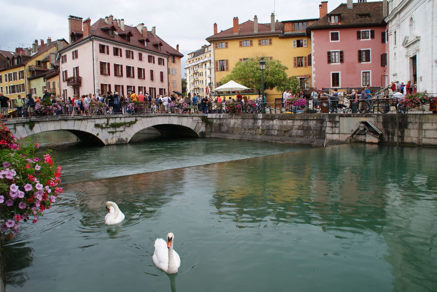 Bruselas Canals Animals Lagos Album Lago Paisajes City Puentes Puente