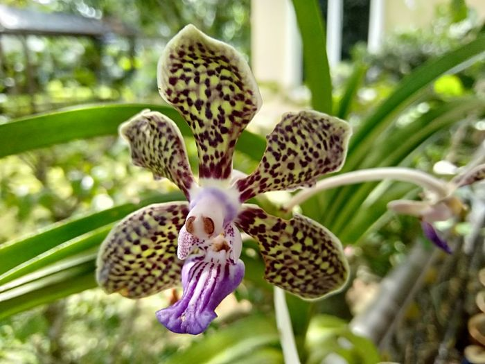 Flower Flower