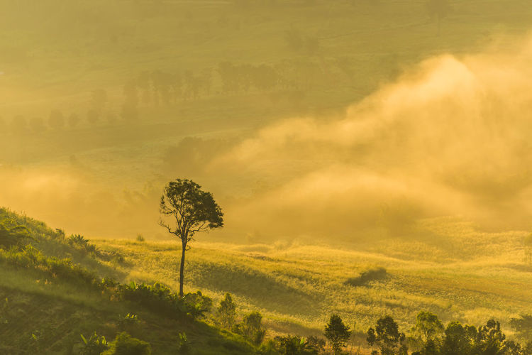 in the mist Tree Rural Scene Dawn Springtime Yellow Field Agriculture Flower Head Natural Parkland Morning Single Tree Long Shadow - Shadow Foggy Atmospheric Mood Storm Cloud Lightning
