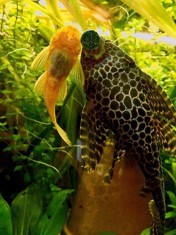 Aquarium Life Fish Photography Neon Life The Week On EyeEm Pet Portraits EyeEmNewHere