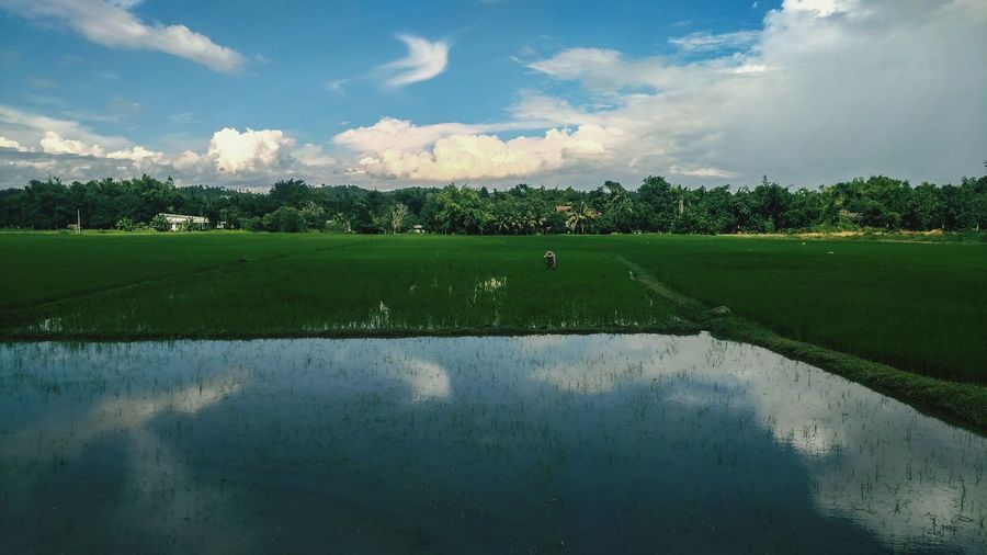 Agriculture Reflection Crop  Water Rural Scene Cloud - Sky Beauty In Nature Nature Food Landscape Irrigation Equipment Freshness Tree Outdoors Flower Grass Rice Paddy Sky Day Rice Field Thailand Farmer Sunny