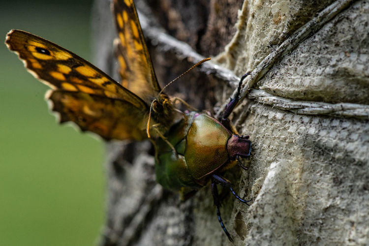Close-up of butterfly on flower tree