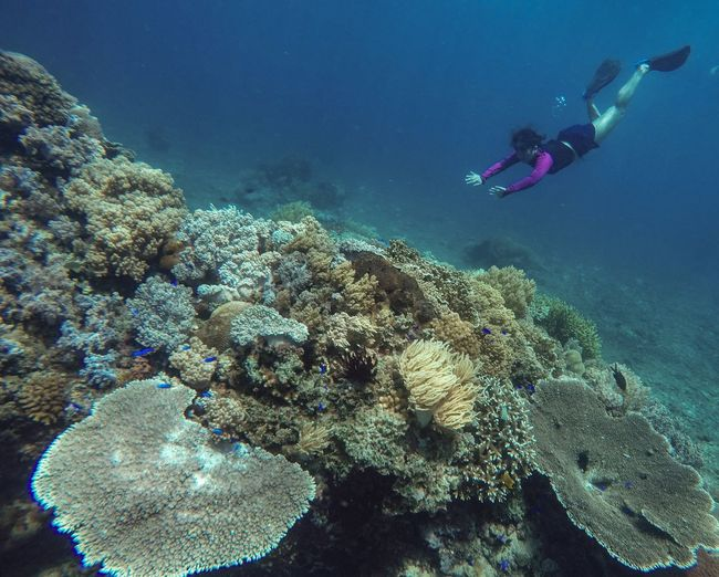 High Angle View Of Woman Swimming By Coral In Sea