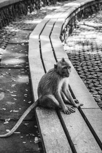 Cat sitting on footpath