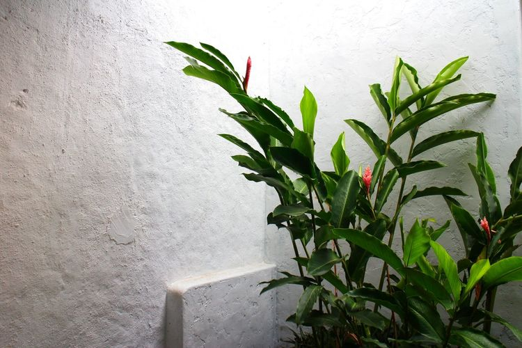 Leaf Plant Growth Green Color No People Nature Day Close-up Indoors  Freshness Plant At The Corner Dramatic
