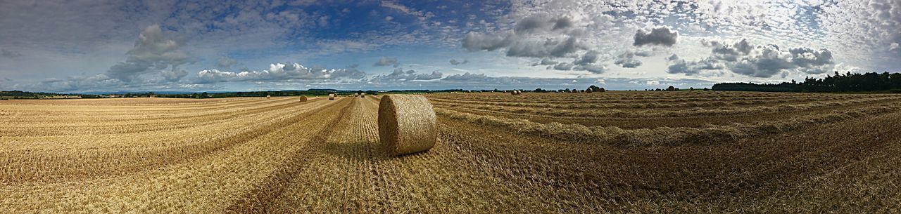 Wheat field, farming, arable, hay, landscape, panoramic Cloud - Sky Rural Scene Agriculture Field Landscape Beauty In Nature Nature Day Gold Colored Scenics Cereal Plant Dramatic Sky No People