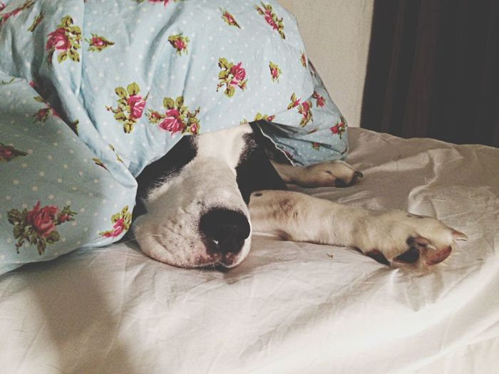 Dog In Bedding