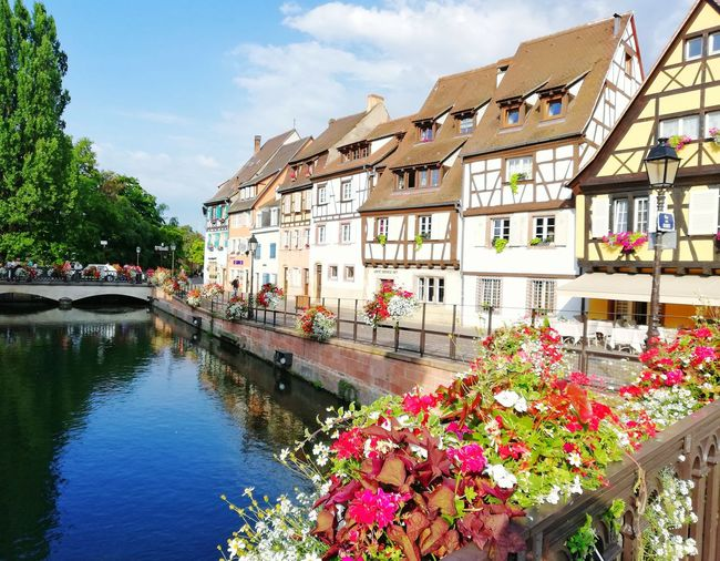 """STRASBOURG, FRANCE- JUNE 29, 2018 : summer view of Colmar old district """"La petite France"""". Alsace Traditional Cultural Heritage Tourism Tourism Destination River Tourist Attraction  Travel Destinations Travel Europe Trip European Architecture Flower Water Tree Reflection House Sky Architecture Building Exterior Built Structure Plant Row House Residential District Blooming Residential Building TOWNSCAPE Cityscape In Bloom Townhouse Petal"""