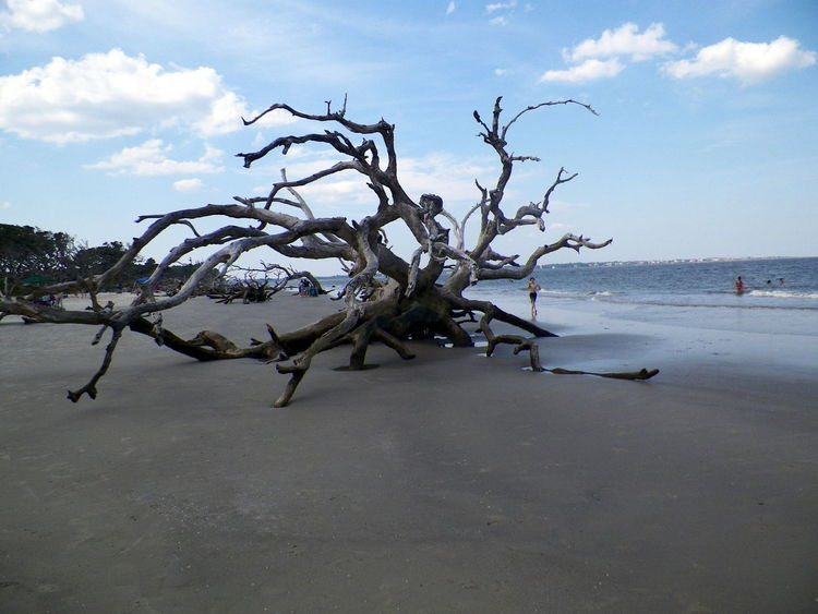 Bare Tree Beach Beauty In Nature Branch Cloud Cloud - Sky Day Driftwood Beach Ga. Jekyll Island Nature No People Outdoors Sand Scenics Sea Shore Sky Tranquil Scene Tranquility Tree Water