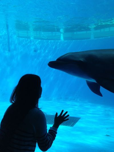They must be communicated with each other. Aquarium Bluesea Dolphin Eyecontact Firend Love Sea Smile Talking