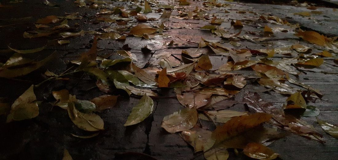Close-up of dried leaves on ground