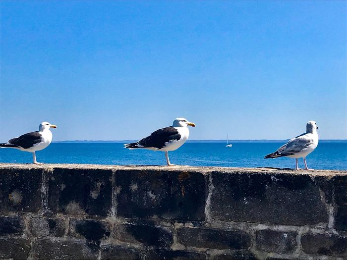 Seagulls perching on a sea against clear sky