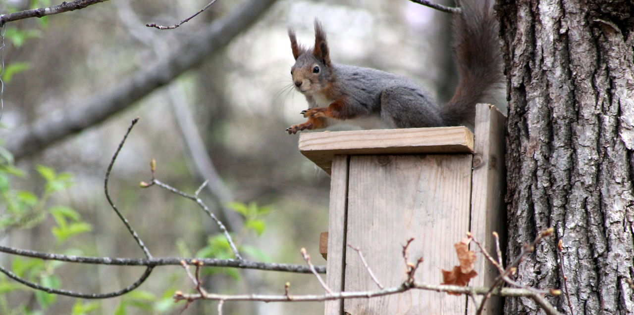 one animal, animal themes, mammal, tree, no people, outdoors, day, tree trunk, focus on foreground, animals in the wild, squirrel, pets, domestic animals, nature, perching, close-up