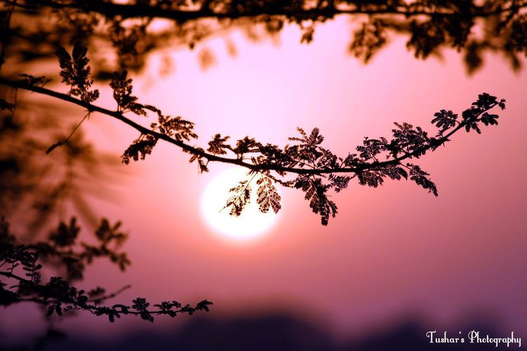 Nature Scenics Tree Beauty In Nature Growth Close-up Freshness Break The Mold EyeEm Selects