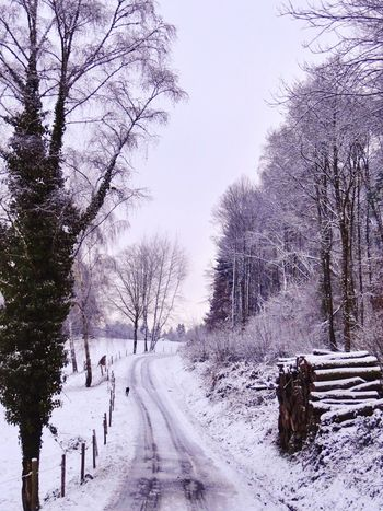 Landscape Landscape_Collection Snow Winter Winter Trees Winter Sky Country Road France Limousin