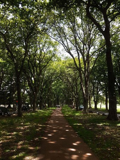 Sun-dappled path in the park. Tree Nature Growth Outdoors Beauty In Nature Tranquility No People The Way Forward Scenics Green Color Day Tranquil Scene Landscape