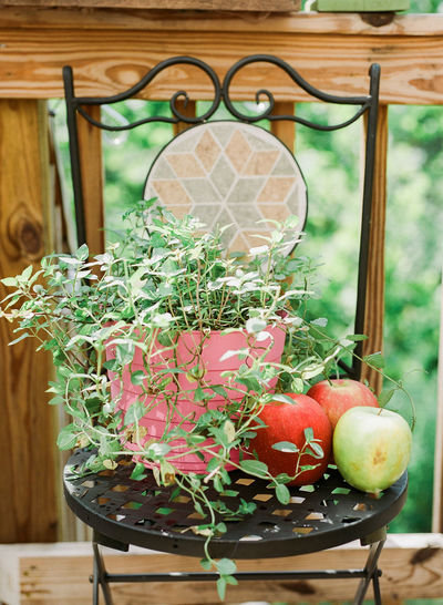 a potted plant on a decorative chair. healthy alternatives. Apple Plants Apples Chair Close-up Day Flower Food Fragility Freshness Growth Healthy Eating Healthy Food Healthy Lifestyle Nature No People Plant Potted Plant Table Wood - Material