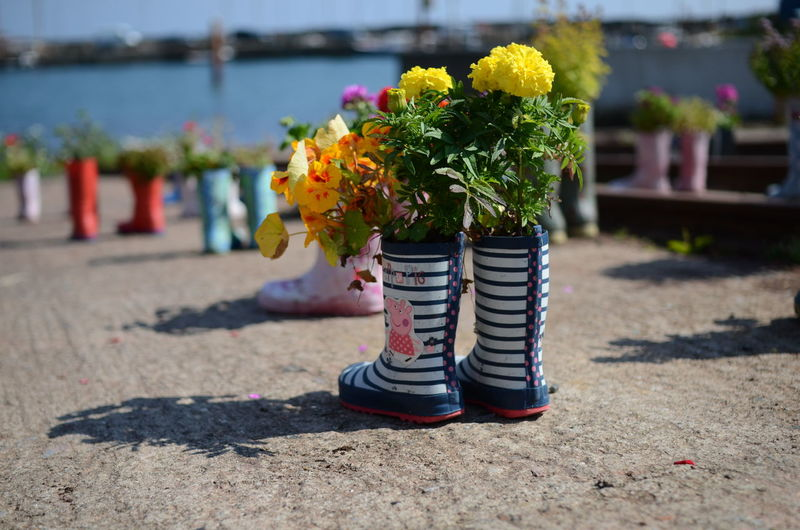 Flowers and leaves in rubber boots on footpath