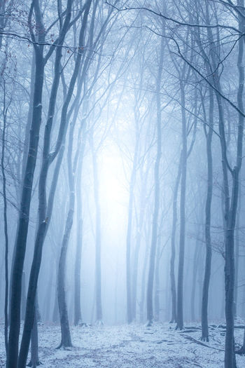 Tree Forest Winter Fog Environment Land Cold Temperature Plant Nature Snow WoodLand Tranquility Scenics - Nature No People Landscape Tranquil Scene Beauty In Nature Mystery Non-urban Scene Outdoors Snowing Blizzard