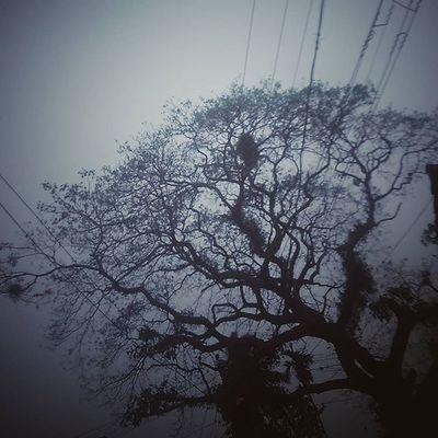 Birdshome Tree Evening Travelldiaries