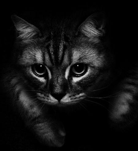 My little kitty♡ Cat Cat♡ Cats Of EyeEm Kitten Kitty Kittensofinstagram Blackandwhite Black & White Canon 60d