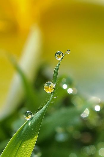 Waterdrops Morning Dew Droplets, Water Droplets, Flowers  Macro Photography Reflection Macro Art Droplets Freshness EyeEm Selects