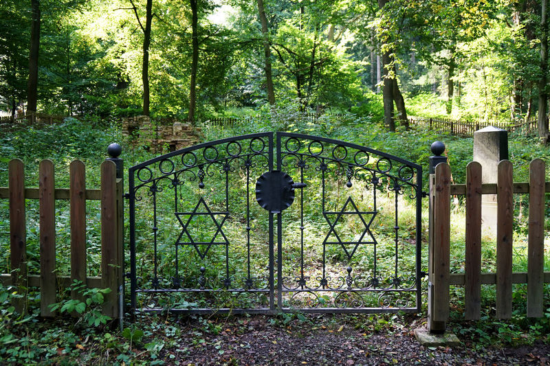 old jewish graveyard Cemetery Entrance Gate Jew Jewish Jewish Graveyard Overgrown Star Of David Day Fence Forest Germany Graveyard Historic Magen David Nature No People Old Outdoors Woods