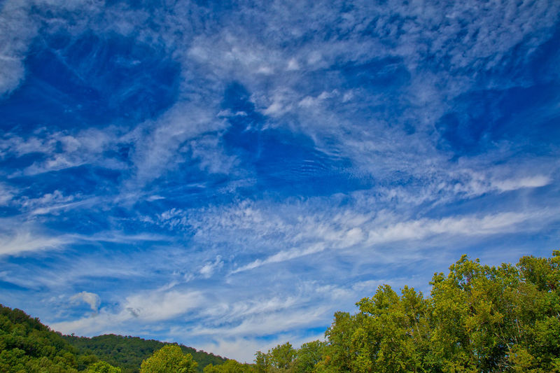 Warm day in the Smoky Mountains Beauty In Nature Blue Day Fluffly High Clouds Low Angle View Nature No People Outdoors Scenics Sky Tranquil Scene Tranquility Tree