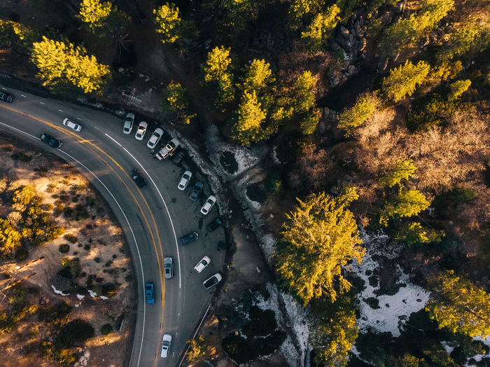 High angle view of autumn trees by road