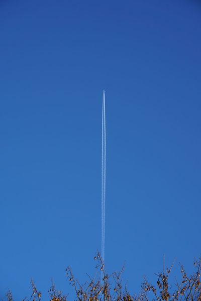 Airplane Blue Centre Clear Sky CoastToCoast Day Flying Flying High Insignificant Nature No People Outdoors Sky Speck Streak Tree Vapor Trail