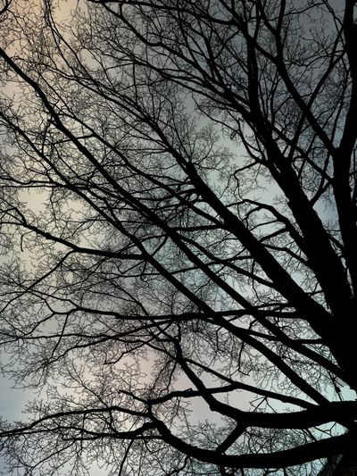 """Strange Skies"" Tree_collection  Tree Branches Dark Sky Trees And Sky Trees And Nature Nature_perfection Connecticut Winter Backgrounds Full Frame Growth Branch Sky Outdoors Beauty In Nature"